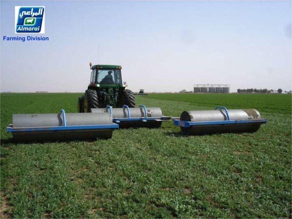 Alfalfa zaad – 20 kg/ha Luzernensamen - 20 kg/ha Luzernensamen - 20 kg/ha..............................
