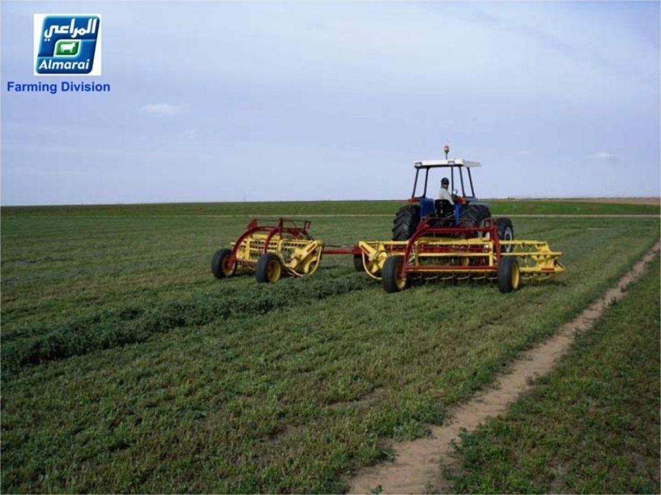 2009 Opbrengst Alfalfa productie: 400.000 Tonnen Snijmaïs: 300.000 Tonnen Rhodes gras: 30.000 Tonnen Luzernen Produktion : 400.000 Tonnen Mais: 300.00