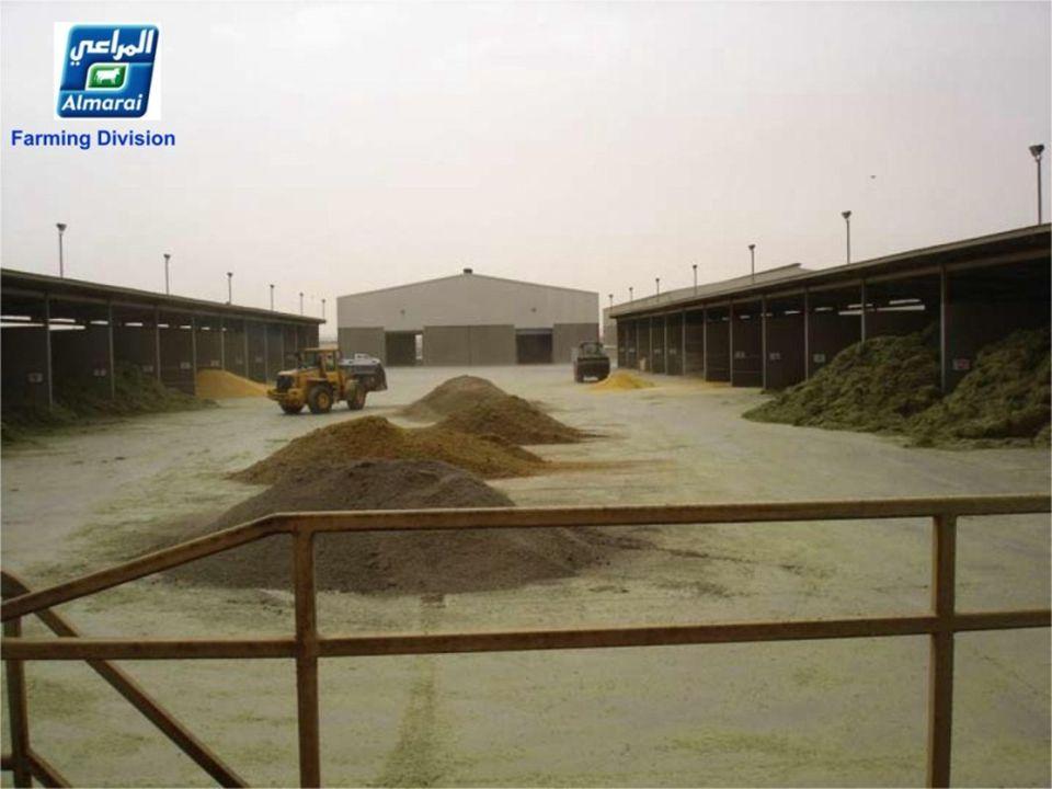 1000 ton hooi per dag! 50 vrachtwagens geladen 1000 Tonnen Heu pro Tag! 50 LKW-Ladungen 1000 Tonnen Heu pro Tag! 50 LKW-Ladungen......................