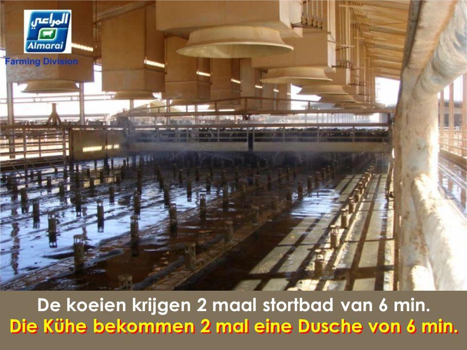 300 koeien per stal, 50 m² per koe 300 Kühe pro Stall, 50 m² pro Kuh 300 Kühe pro Stall, 50 m² pro Kuh..................................