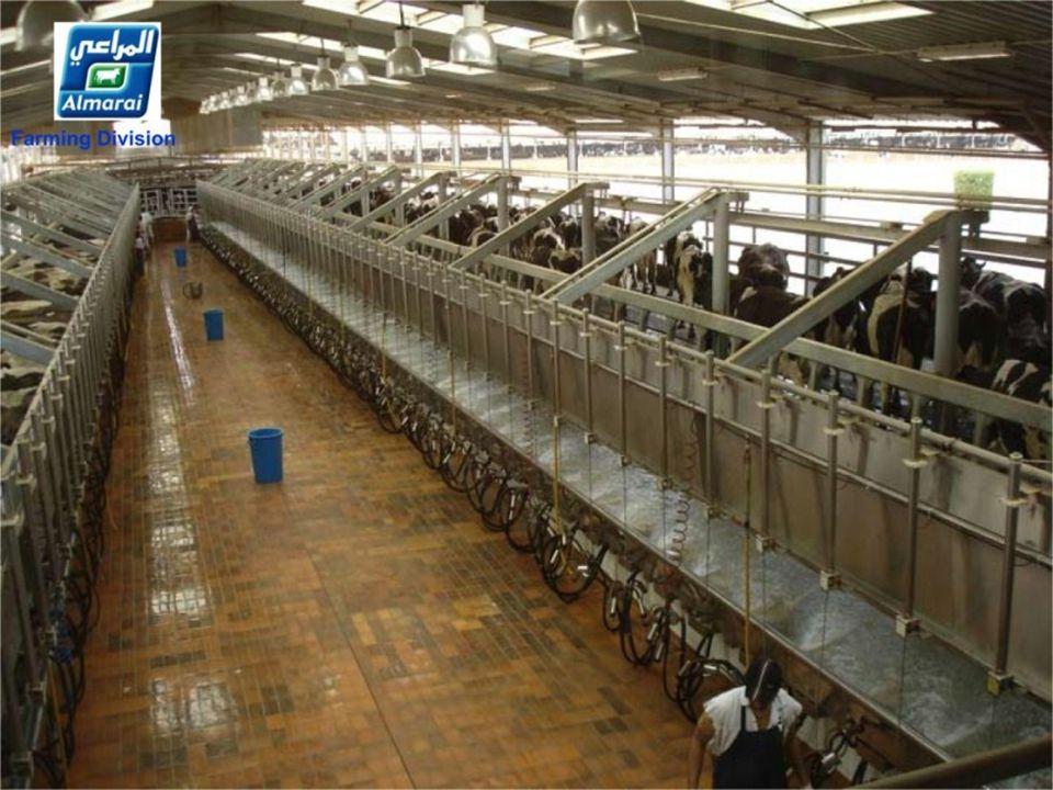 Koeien drogen in 15 minuten Die Kühe trocknen in 15 Minuten Die Kühe trocknen in 15 Minuten..........................