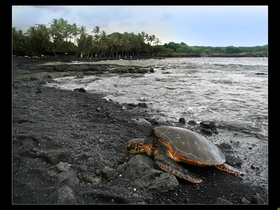 24 Punaluu is a beach between Pahala and Na Alehu in Hawaii. The black sand comes from basalt lava formed, a feature also found in other beaches of Ha