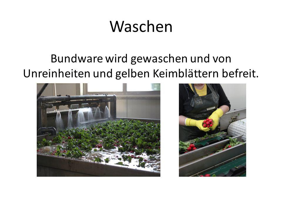 Waschen Bundware wird gewaschen und von Unreinheiten und gelben Keimblättern befreit.