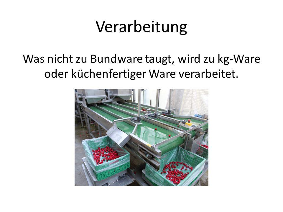 Verarbeitung Was nicht zu Bundware taugt, wird zu kg-Ware oder küchenfertiger Ware verarbeitet.