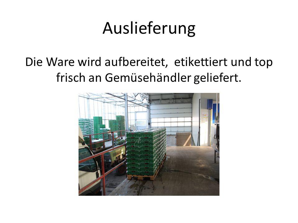 Auslieferung Die Ware wird aufbereitet, etikettiert und top frisch an Gemüsehändler geliefert.