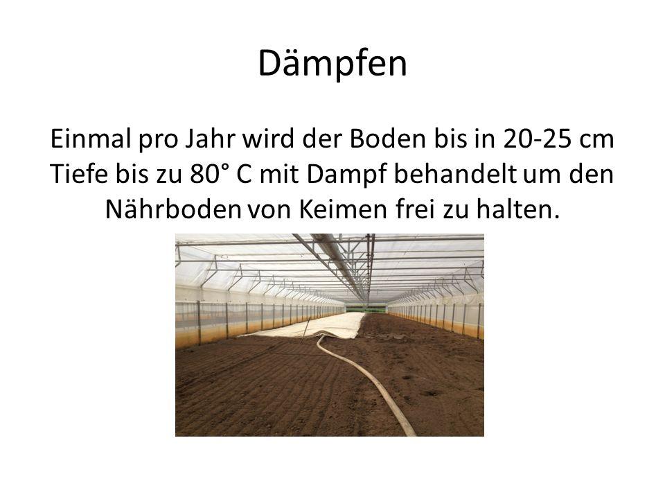 Dämpfen Einmal pro Jahr wird der Boden bis in 20-25 cm Tiefe bis zu 80° C mit Dampf behandelt um den Nährboden von Keimen frei zu halten.