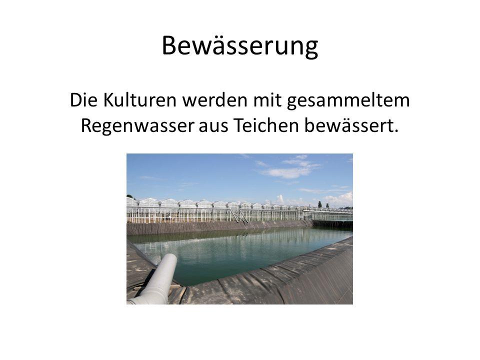 Bewässerung Die Kulturen werden mit gesammeltem Regenwasser aus Teichen bewässert.