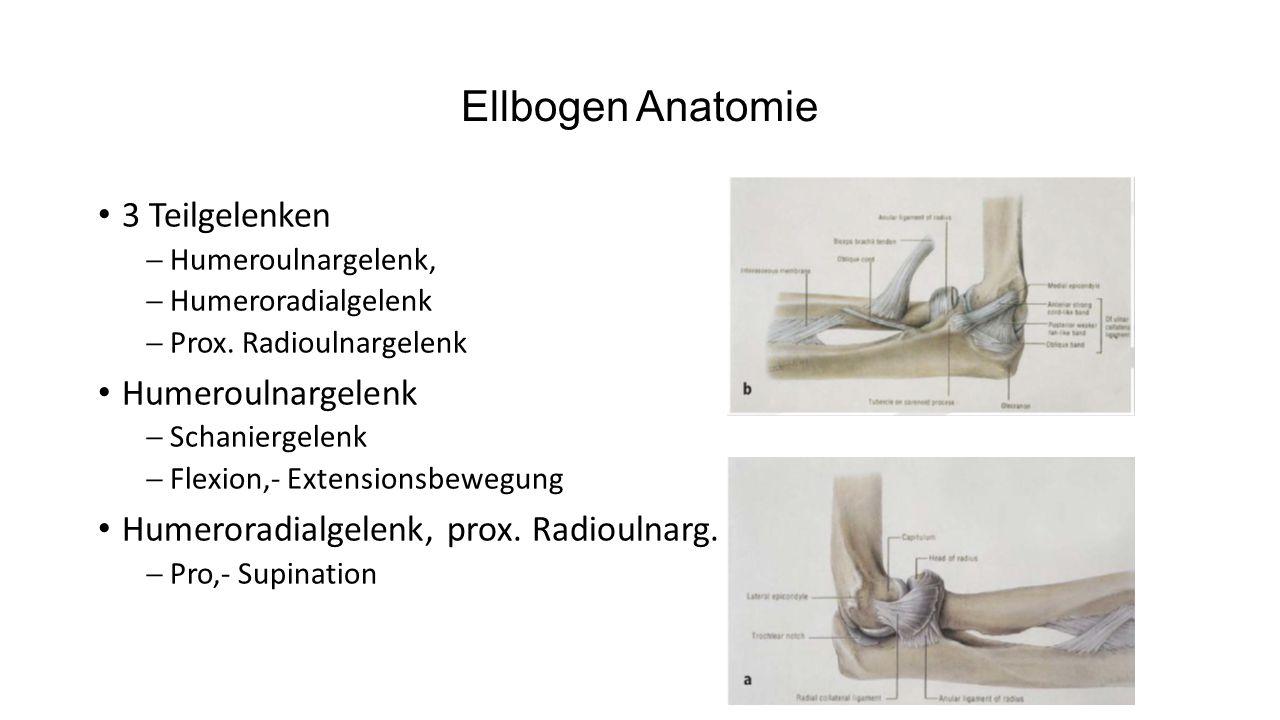 Ellbogen Anatomie 2 Seitenbänder  Lig.collaterale radiale  Lig.