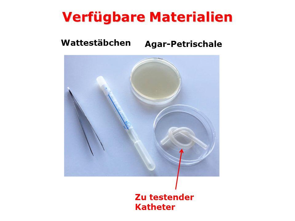 Verfügbare Materialien Zu testender Katheter Agar-Petrischale Wattestäbchen