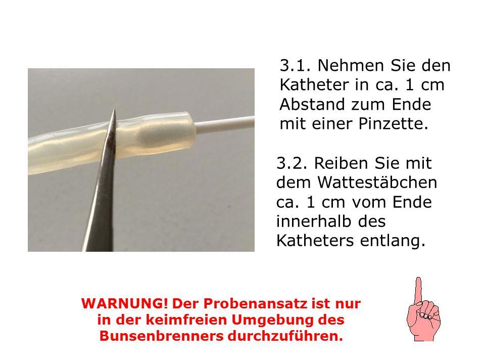 3.1. Nehmen Sie den Katheter in ca. 1 cm Abstand zum Ende mit einer Pinzette. WARNUNG! Der Probenansatz ist nur in der keimfreien Umgebung des Bunsenb