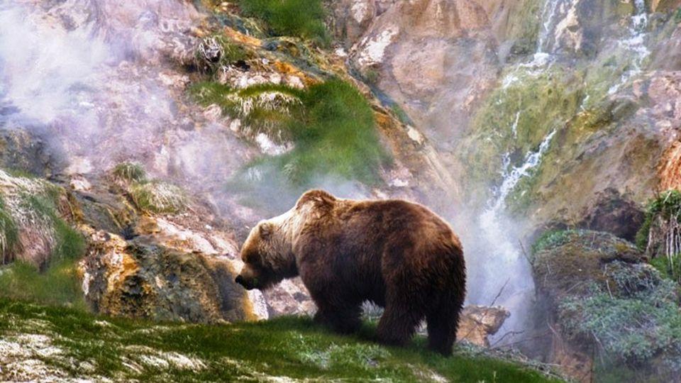 Die Halbinsel ist die Heimat für mehrere seltene Kreatur. Die Kamtschatka Braunbär, die Bergziege,, die Bisamratte, der Vielfraß, der Steinadler und d