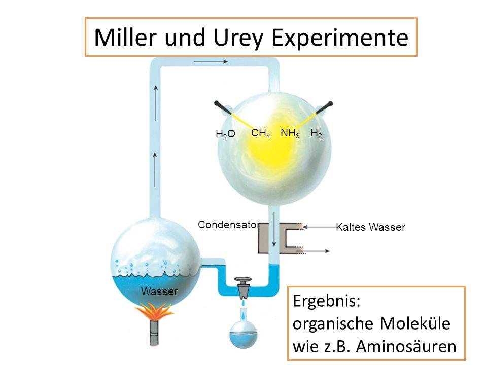 CH 4 NH 3 H2H2 Kaltes Wasser Condensator Wasser H2OH2O Miller und Urey Experimente Ergebnis: organische Moleküle wie z.B. Aminosäuren