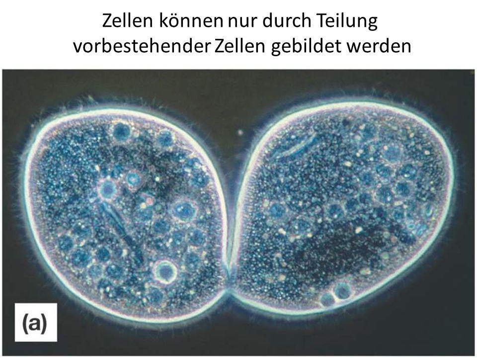 Die ersten Zellen müssen sich aus nicht-lebendem Material ergeben haben.