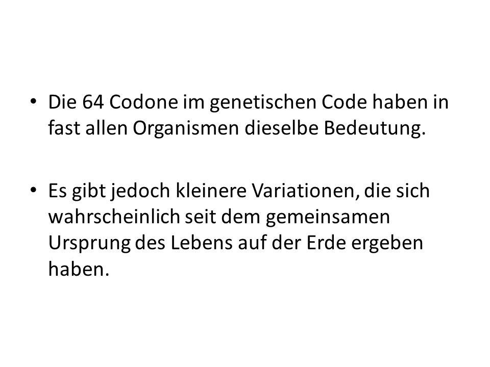 Die 64 Codone im genetischen Code haben in fast allen Organismen dieselbe Bedeutung. Es gibt jedoch kleinere Variationen, die sich wahrscheinlich seit