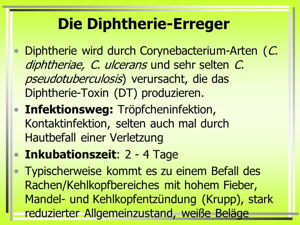 Die Diphtherie-Erreger Diphtherie wird durch Corynebacterium-Arten (C. diphtheriae, C. ulcerans und sehr selten C. pseudotuberculosis) verursacht, die