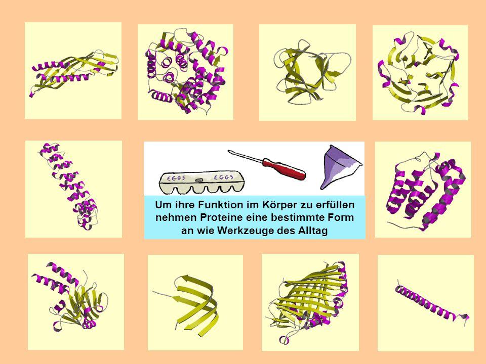 Um ihre Funktion im Körper zu erfüllen nehmen Proteine eine bestimmte Form an wie Werkzeuge des Alltag