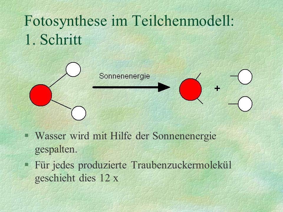 §Die 12 Sauerstoffatome verbinden sich zu 6 Sauerstoffmolekülen und werden abgegeben §Die 24 Wasserstoffatome werden im zweiten Schritt weiterverarbeitet.