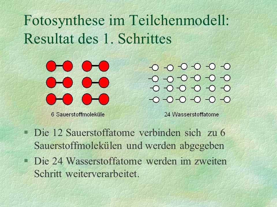 §Die 12 Sauerstoffatome verbinden sich zu 6 Sauerstoffmolekülen und werden abgegeben §Die 24 Wasserstoffatome werden im zweiten Schritt weiterverarbei