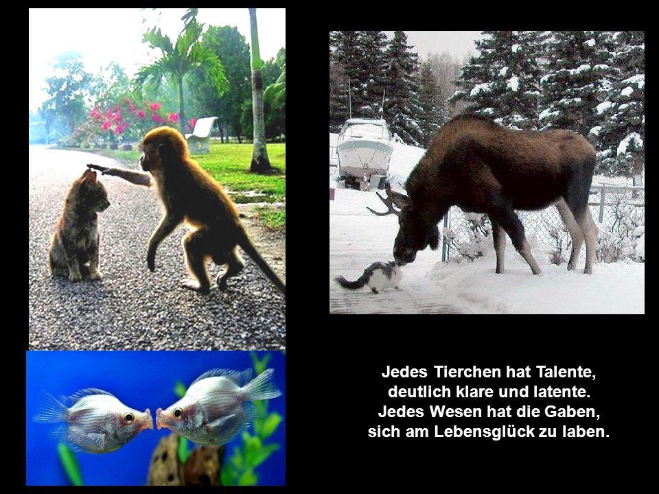 Jedes Tierchen hat Talente, deutlich klare und latente.