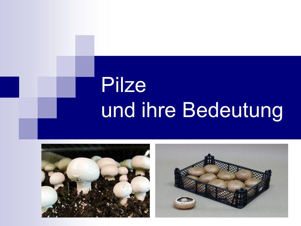 Pilze und ihre Bedeutung