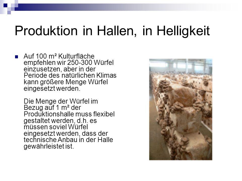 Produktion in Hallen, in Helligkeit Auf 100 m² Kulturfläche empfehlen wir 250-300 Würfel einzusetzen, aber in der Periode des natürlichen Klimas kann