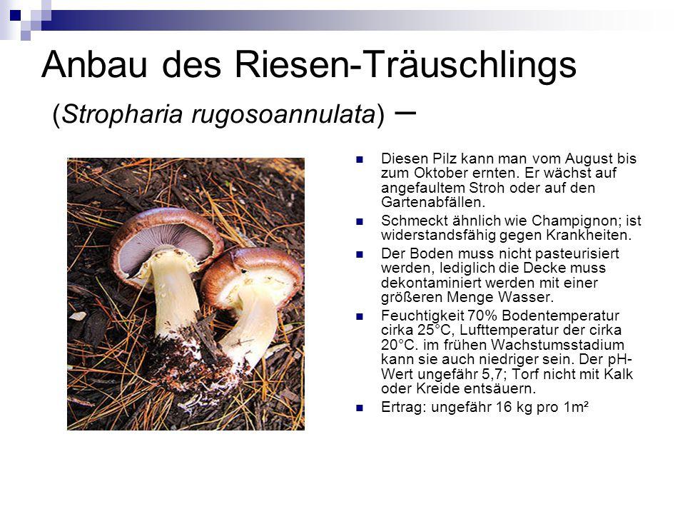 Anbau des Riesen-Träuschlings (Stropharia rugosoannulata) – Diesen Pilz kann man vom August bis zum Oktober ernten. Er wächst auf angefaultem Stroh od