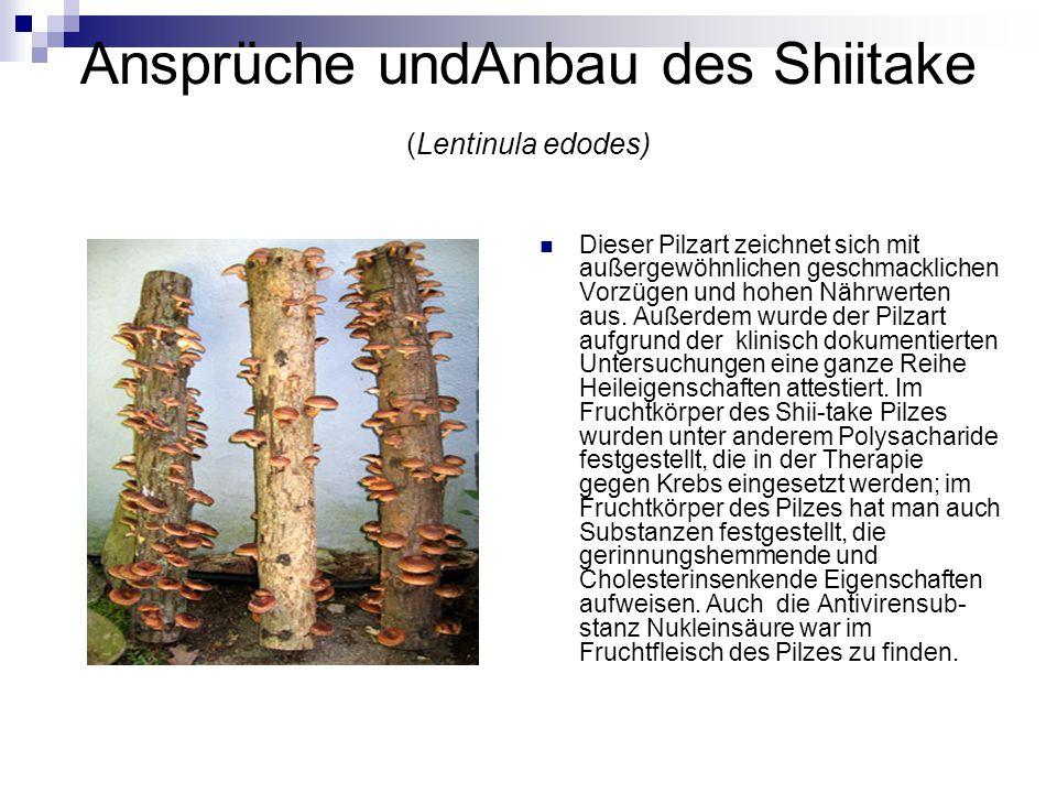 Ansprüche undAnbau des Shiitake (Lentinula edodes) Dieser Pilzart zeichnet sich mit außergewöhnlichen geschmacklichen Vorzügen und hohen Nährwerten au