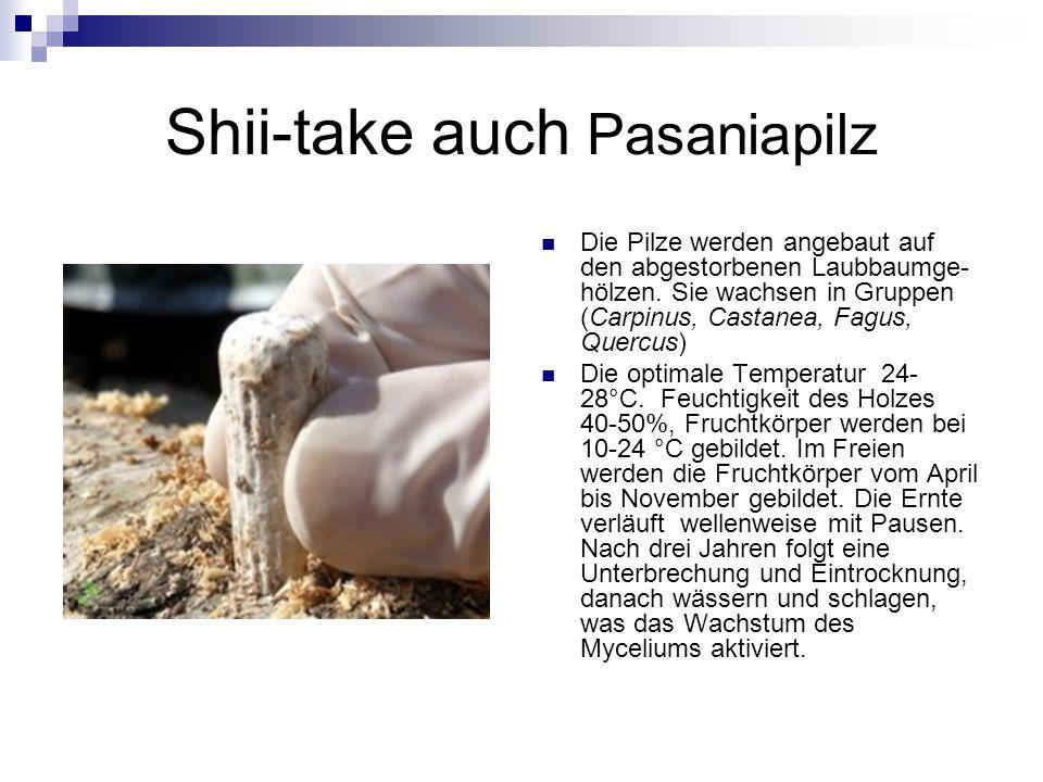 Shii-take auch Pasaniapilz Die Pilze werden angebaut auf den abgestorbenen Laubbaumge- hölzen. Sie wachsen in Gruppen (Carpinus, Castanea, Fagus, Quer