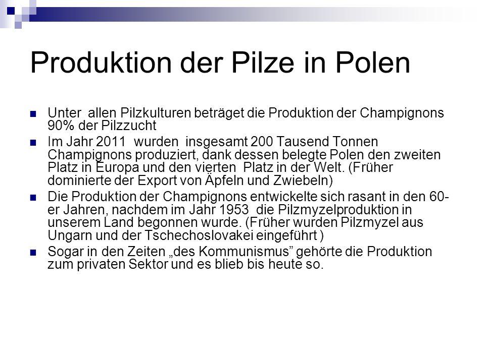 Produktion der Pilze in Polen Unter allen Pilzkulturen beträget die Produktion der Champignons 90% der Pilzzucht Im Jahr 2011 wurden insgesamt 200 Tau