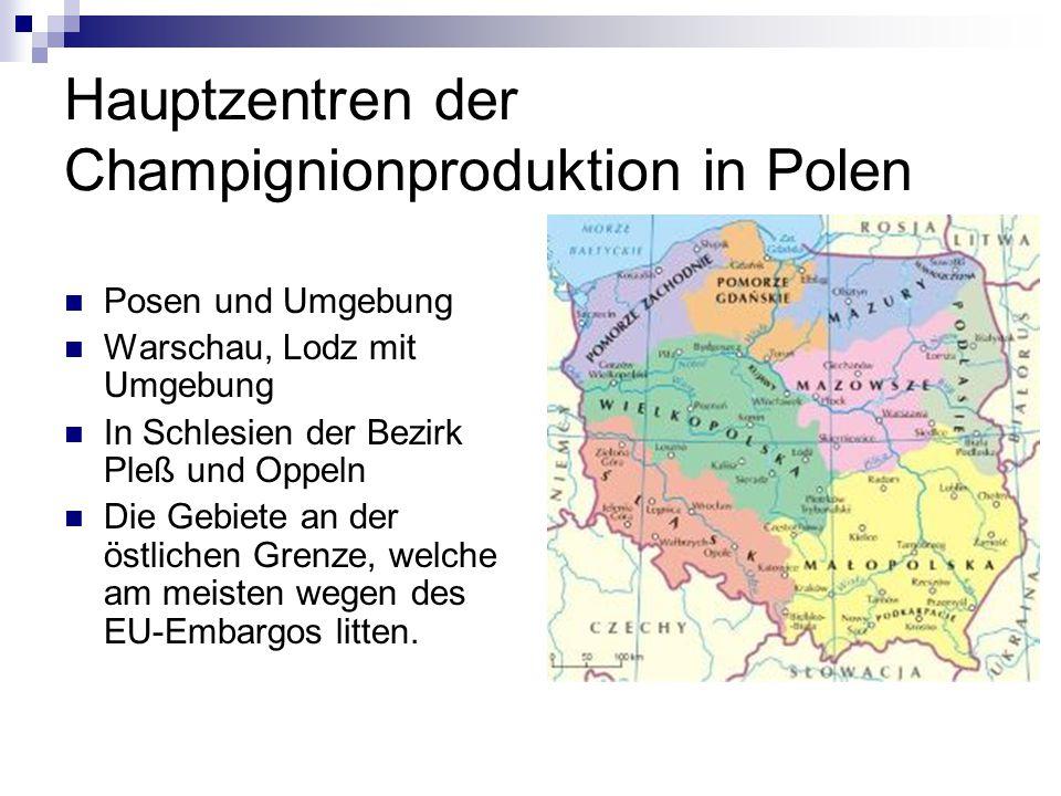 Hauptzentren der Champignionproduktion in Polen Posen und Umgebung Warschau, Lodz mit Umgebung In Schlesien der Bezirk Pleß und Oppeln Die Gebiete an
