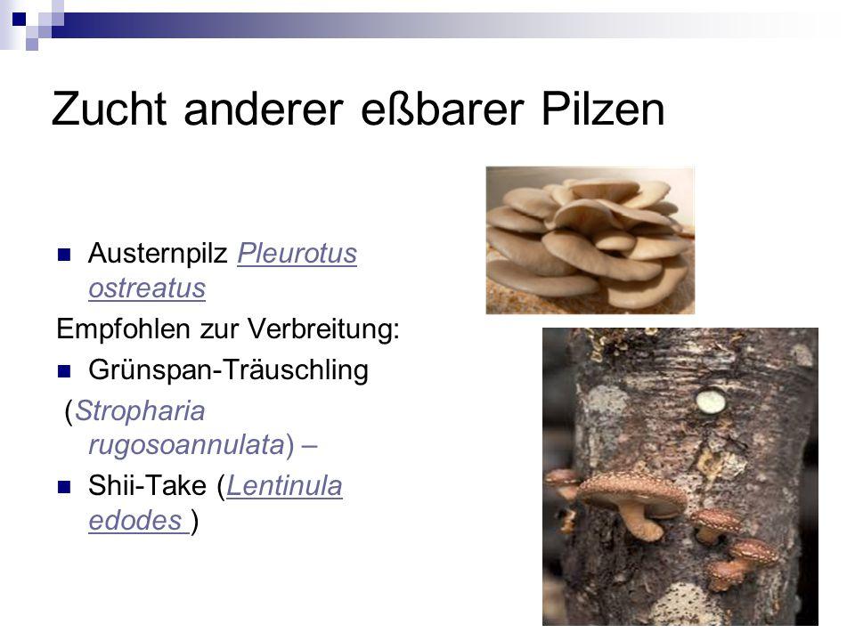 Zucht anderer eßbarer Pilzen Austernpilz Pleurotus ostreatusPleurotus ostreatus Empfohlen zur Verbreitung: Grünspan-Träuschling (Stropharia rugosoannu