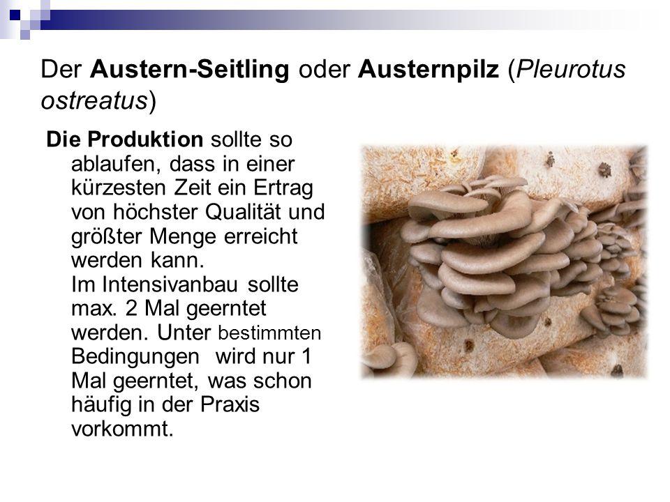 Der Austern-Seitling oder Austernpilz (Pleurotus ostreatus) Die Produktion sollte so ablaufen, dass in einer kürzesten Zeit ein Ertrag von höchster Qu