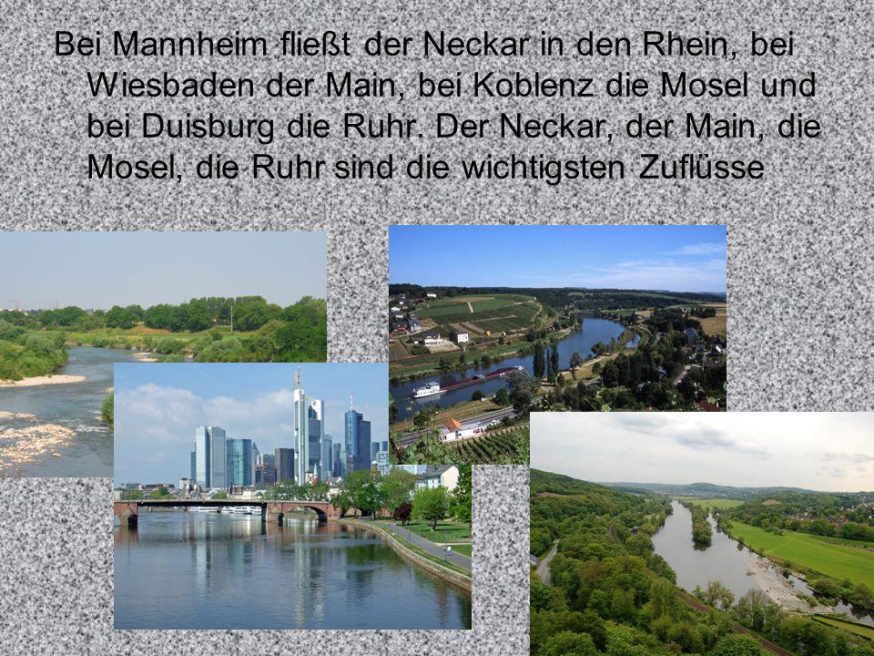 Bei Mannheim fließt der Neckar in den Rhein, bei Wiesbaden der Main, bei Koblenz die Mosel und bei Duisburg die Ruhr. Der Neckar, der Main, die Mosel,