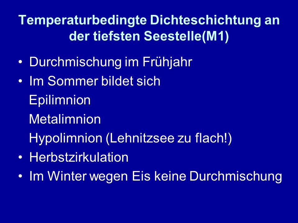 Temperaturbedingte Dichteschichtung an der tiefsten Seestelle(M1) Durchmischung im Frühjahr Im Sommer bildet sich Epilimnion Metalimnion Hypolimnion (Lehnitzsee zu flach!) Herbstzirkulation Im Winter wegen Eis keine Durchmischung