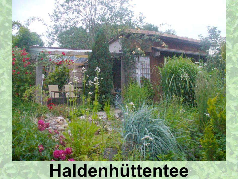 Entstehungs-Geschichte Geschichte von Haldenhüttentee Namensfindung Logo Haldenhüttentee – Sie werden ihn lieben!