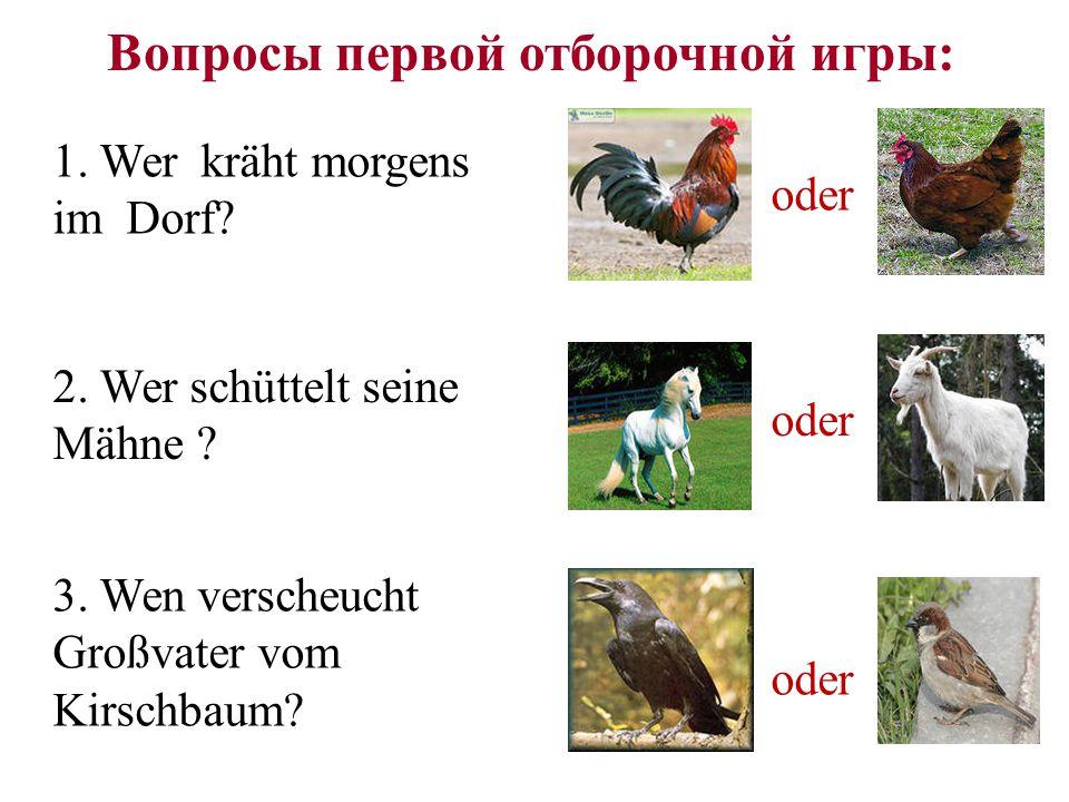 Die erste Aufgabe die Kuh das Pferd das Schaf das Schwein Wie heißen diese Haustiere mit einem Wort?