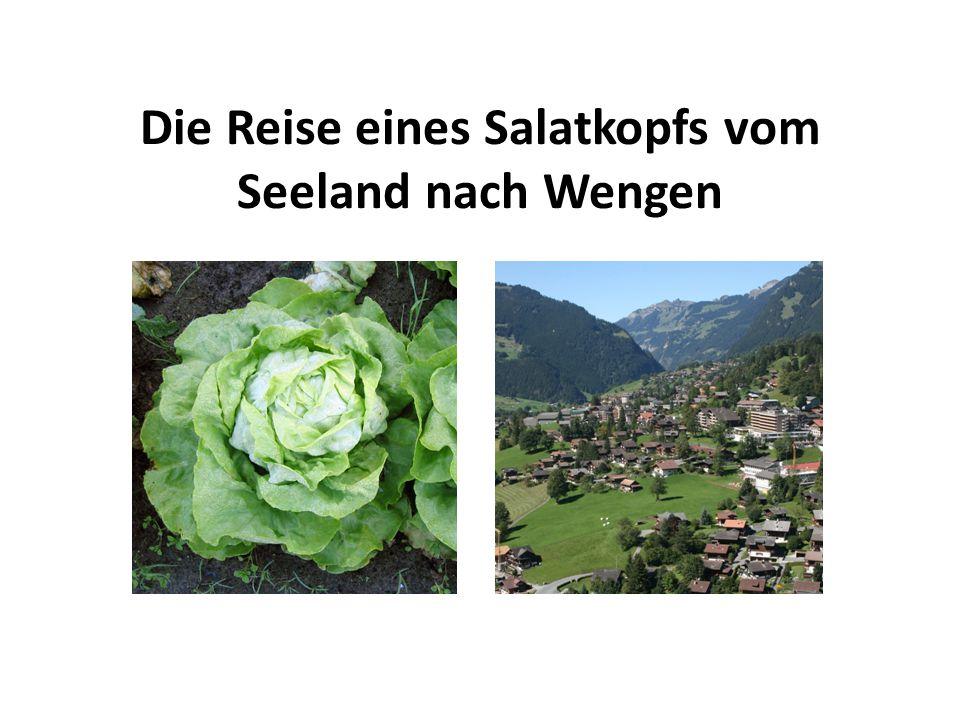 Die Reise eines Salatkopfs vom Seeland nach Wengen