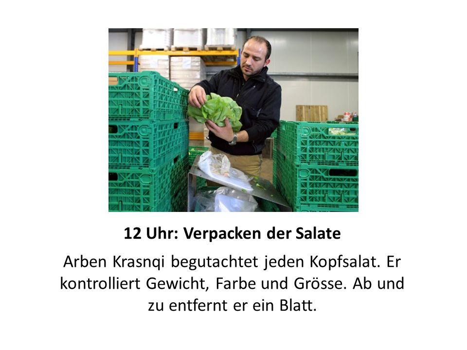 12 Uhr: Verpacken der Salate Arben Krasnqi begutachtet jeden Kopfsalat.