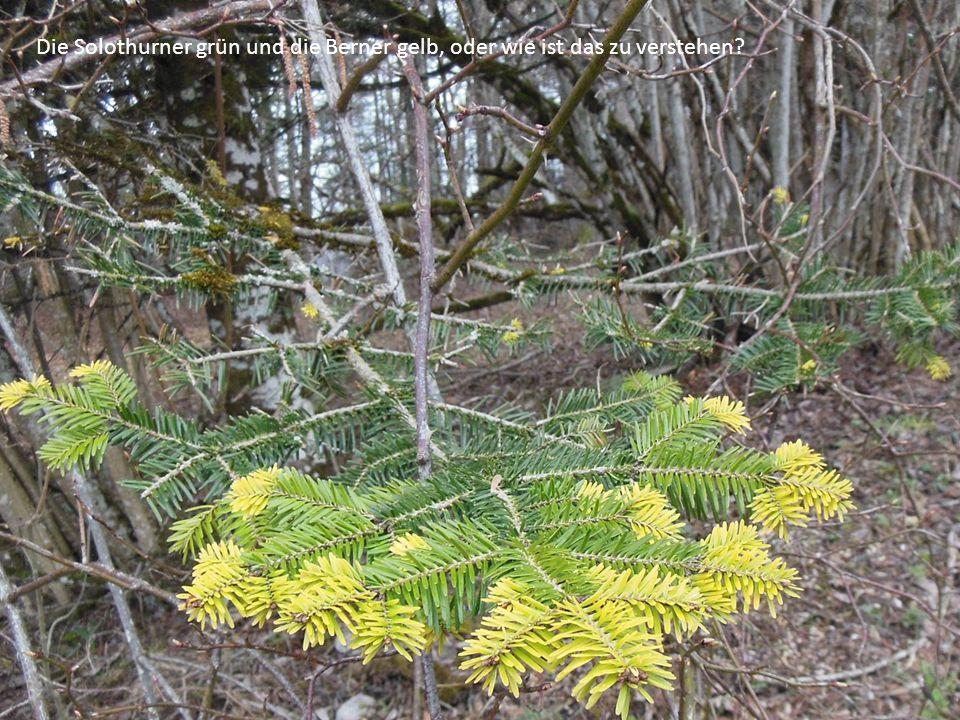 Die Solothurner grün und die Berner gelb, oder wie ist das zu verstehen