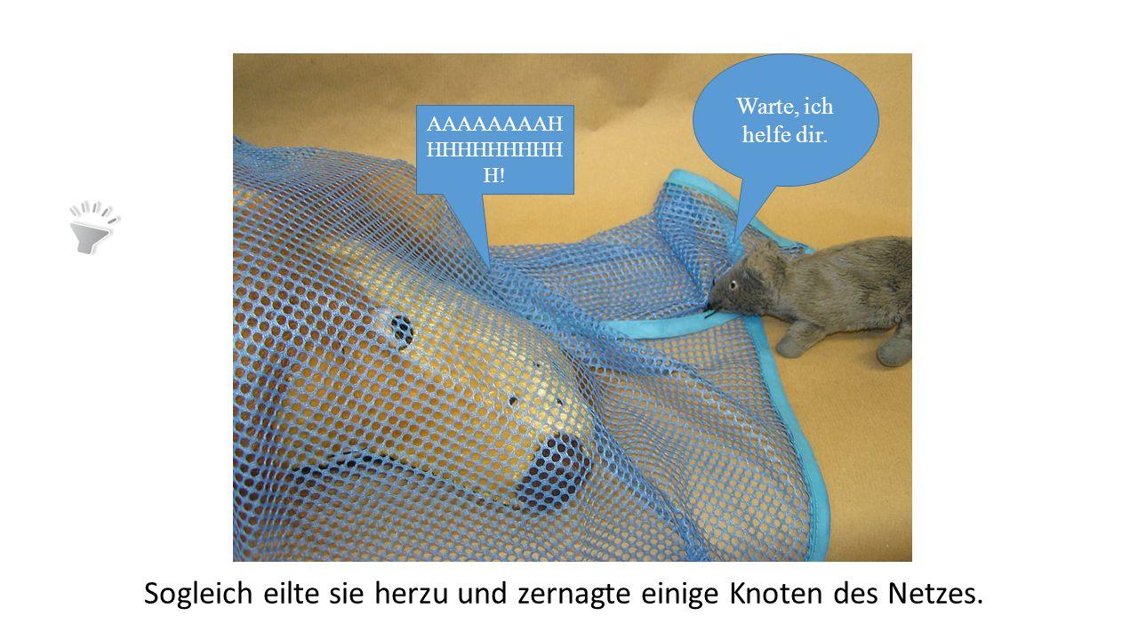 """Neugierig lief die Maus dahin, von wo der Schall kam, und fand ihren Wohltäter in einem Netze gefangen. """"Hilfe, Hilfe!"""", sagte der Löwe. """"Ich komme sc"""