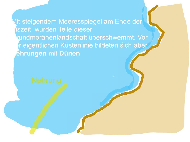 Nehrung Mit steigendem Meeresspiegel am Ende der Eiszeit wurden Teile dieser Grundmoränenlandschaft überschwemmt. Vor der eigentlichen Küstenlinie bil