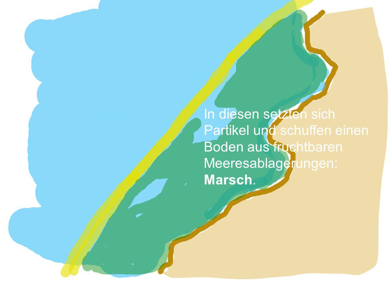 Meereseinbruch >> Watten- meer Die seit Jahrhunderten anhaltende Landsenkung liess den Dünenwall gegen die Nordsee einbrechen.