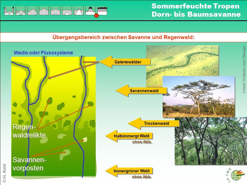 Übergangsbereich zwischen Savanne und Regenwald: Halbimmergr.Wald ohne Abb. Immergrüner Wald ohne Abb. Wadis oder Flusssysteme Regen- waldrelikte Rege