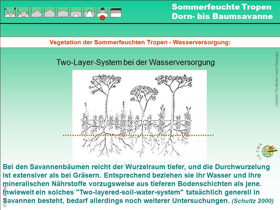Vegetation der Sommerfeuchten Tropen - Wasserversorgung: Two-Layer-System bei der Wasserversorgung Bei den Savannenbäumen reicht der Wurzelraum tiefer
