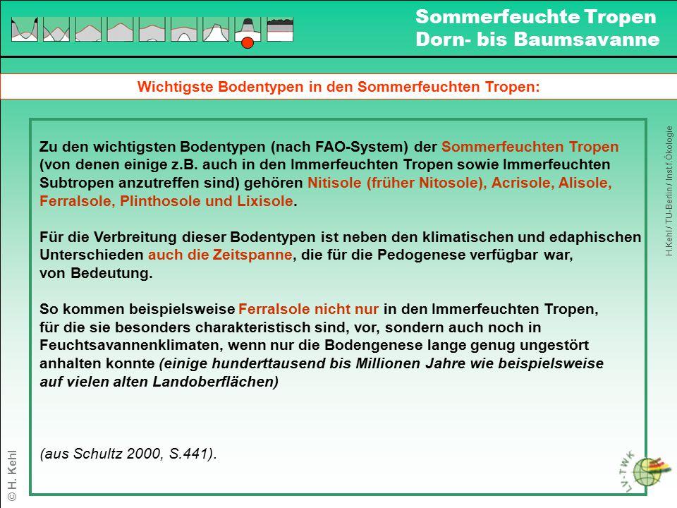 Wichtigste Bodentypen in den Sommerfeuchten Tropen: Zu den wichtigsten Bodentypen (nach FAO-System) der Sommerfeuchten Tropen (von denen einige z.B. a