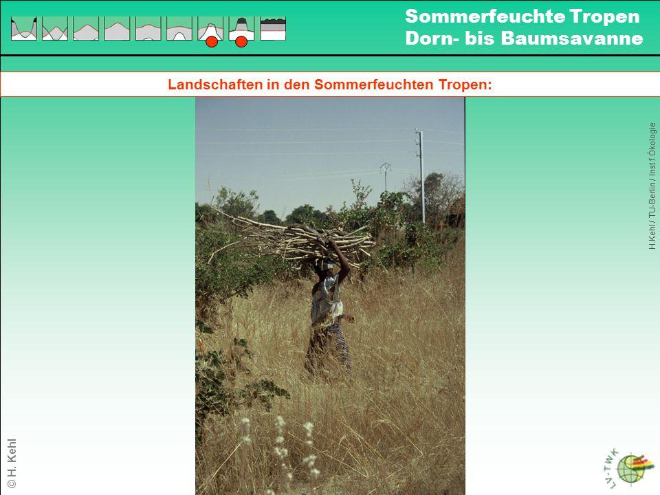 Landschaften in den Sommerfeuchten Tropen: H.Kehl / TU-Berlin / Inst.f.Ökologie Sommerfeuchte Tropen Dorn- bis Baumsavanne © H. Kehl