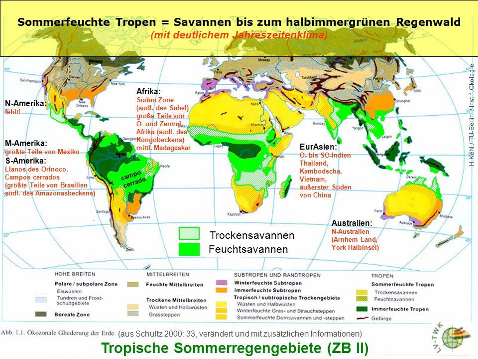Vegetation der Sommerfeuchten Tropen - Halbimmergrüner Wald: Regionen mit einem Wechsel von Trocken- und Regenperioden im Jahreswechsel (z.B Indien, Südostasien, Teile von Afrika, Mittel- und Südamerika) im Anschluss an den Immergrünen Tropenwald: > Es handelt sich um einen sehr artenreichen Waldtyp > typisch ist das Nebeneinander von belaubten und nichtbelaubten Bäumen während der Trockenzeit Die Synchronie des Laubfalls in halbimmergrünen Wäldern ist nur partiell, die laublose Phase ist meist nur sehr kurz und hängt von den jeweiligen Standortbedingungen ab.
