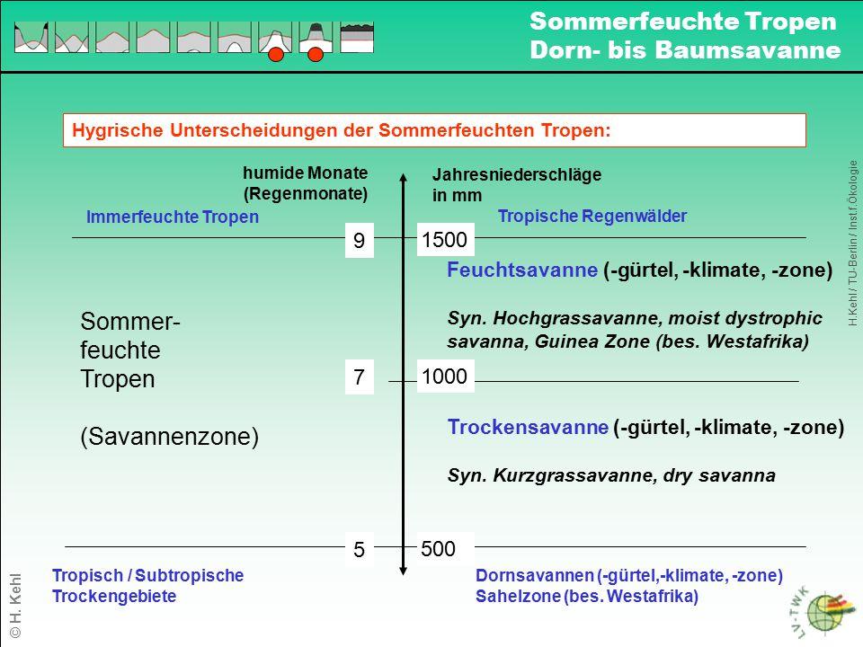 Hygrische Unterscheidungen der Sommerfeuchten Tropen: Tropisch / Subtropische Trockengebiete Dornsavannen (-gürtel,-klimate, -zone) Sahelzone (bes. We