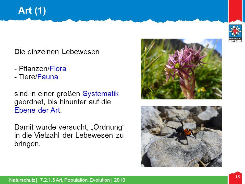 Naturschutz | 15 Die einzelnen Lebewesen - Pflanzen/Flora - Tiere/Fauna sind in einer großen Systematik geordnet, bis hinunter auf die Ebene der Art.