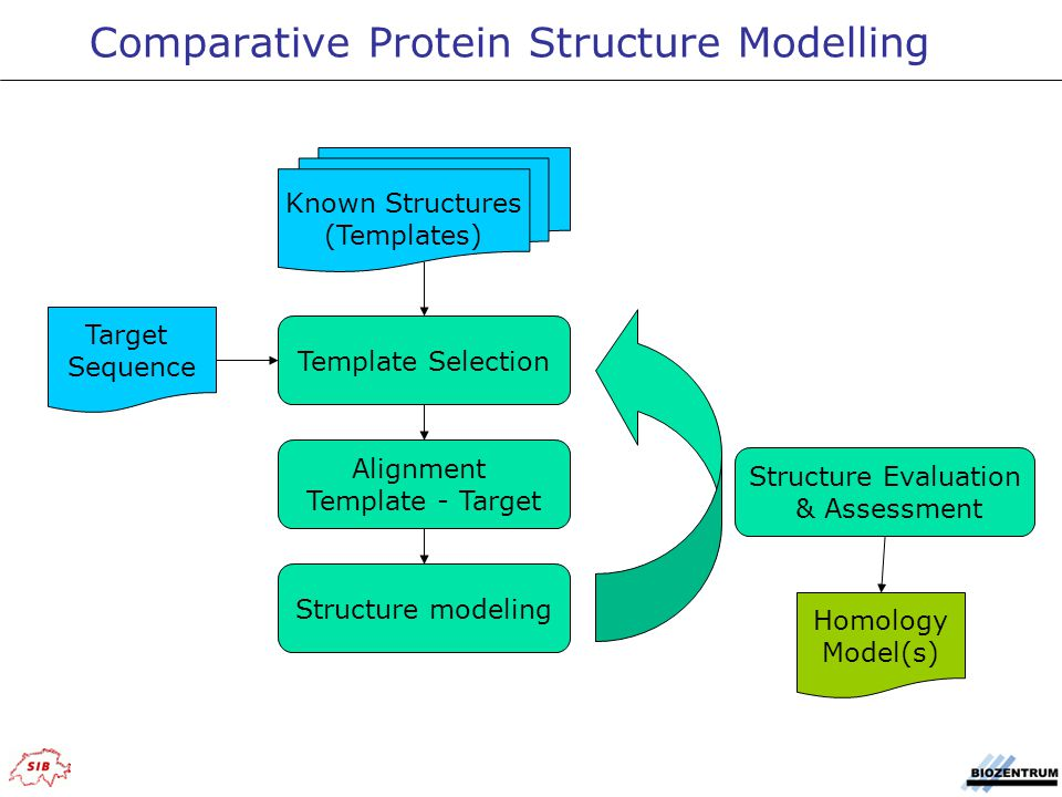 Known Structures (Templates) Target Sequence Template Selection Alignment Template - Target Structure modeling Structure Evaluation & Assessment Homology Model(s) Comparative Protein Structure Modelling